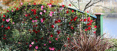 Naturescreen trellis systems