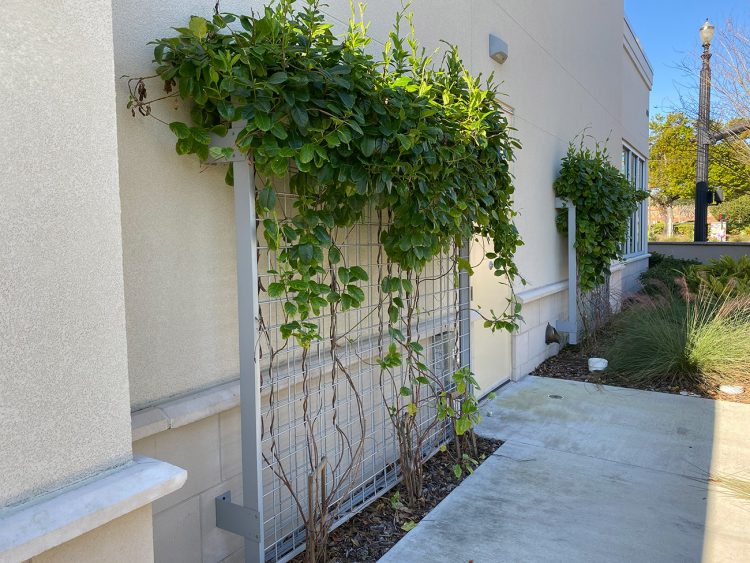 Wall Mounted Trellis in Casselberry, Florida | CityScapes Inc.